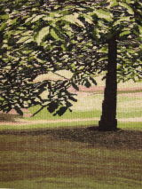 Tree (cropped)