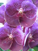 Photo: Orchid Thailand