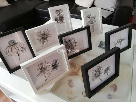 Collection of daisies.