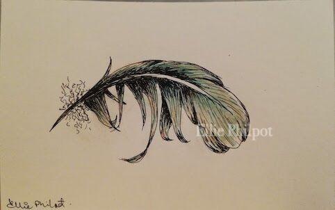 Feather 2. Postcard.