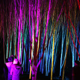 Anglesey Abbey's stunning winter lights