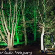 A walk through the tree lit pathways