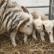 Mum and new born twins