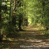 Stroll in the sunshine