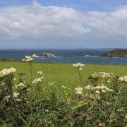 Cornwallscape