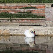 Whose a pretty parrot?