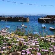floral harbour