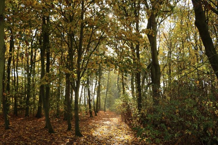 Walk in the autumnal sunshine at Grafham Water