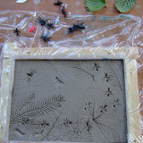 Insects pressed into clay