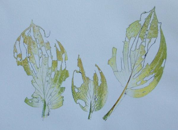 Host leaves eaten by slugs
