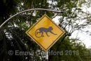 Monkey Crossing!