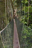 Canopy Walkway