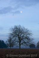 Waning autumnal moon