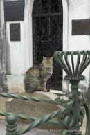 Cemetery Cat in La Recoleta