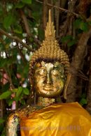 Buddha with offerings of gold leaf