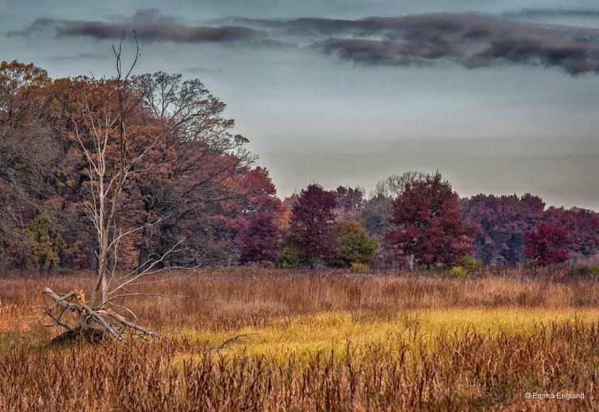 Fall Colour at Middlefork Savanna