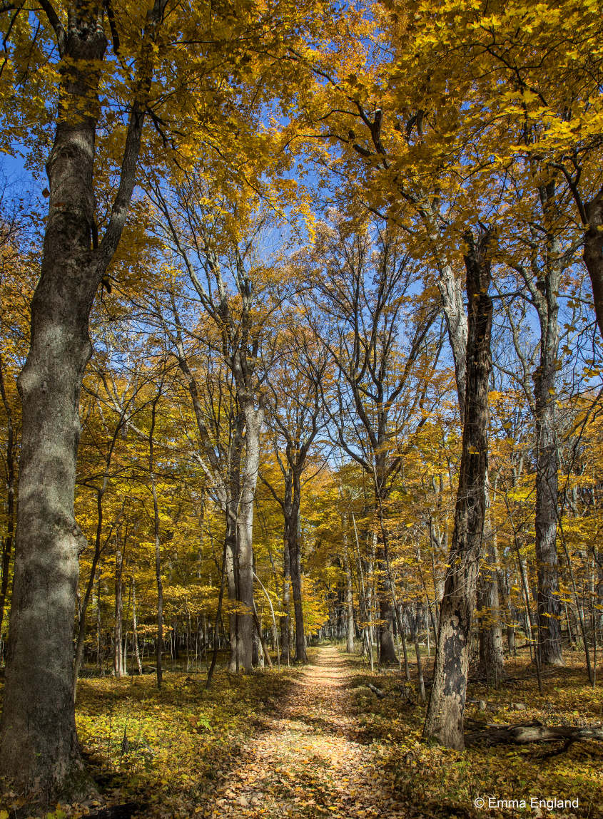 Forest Trail in Fall Colour
