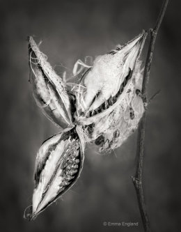 Pods and seeds