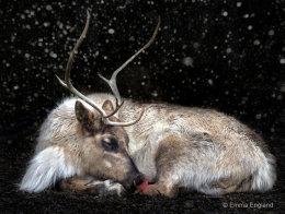 Rudolph Takes a Break