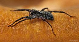 Spider on a mushroom