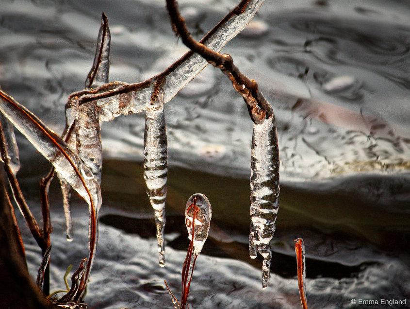 Tree icicles