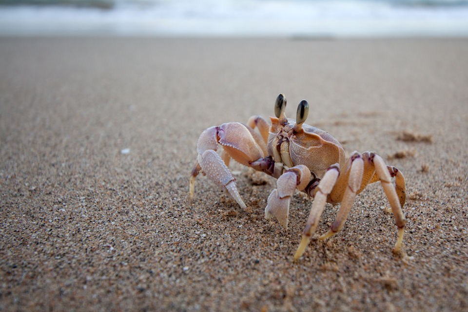 A crab running over the beach. Canon 50D, Canon EF-S 10-22mm f/3.5-4.5 USM, 1/40, f/5, iso 100, handhold.