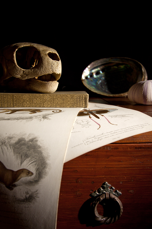 Still life with prints from d'orbigny, sea turtle skull, sea urchin skin and an abalone shell. Canon 50D, Canon EF-S 10-22mm f/3.5-4.5 USM, 1s, f/4,5, iso 100, tripod.