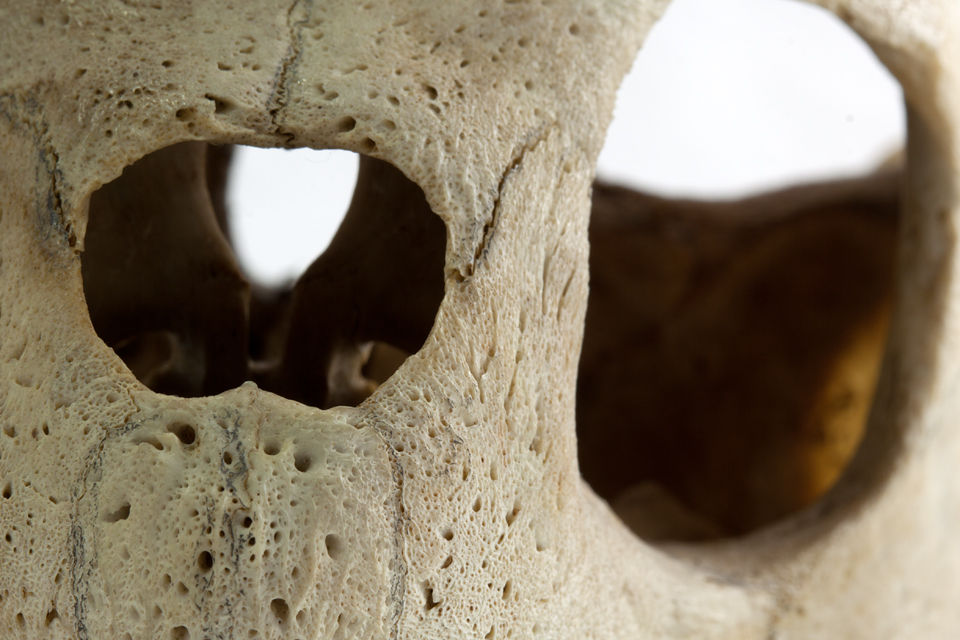 Detail of a sea turtle skull. Canon 50D, Canon EF 100mm f/2.8 USM Macro, 2,5, f/16, iso 100, tripod.