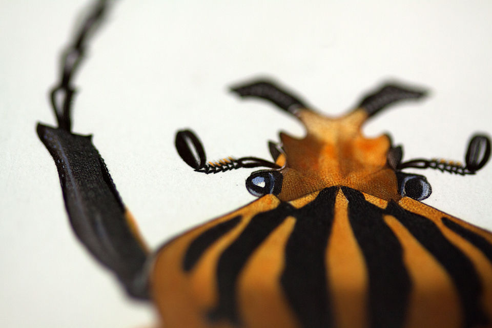 Detail of Goliath beetle on a print of d'orbigny. Canon 50D, Canon EF 100mm f/2.8 USM Macro, 1/60, f/2,8, iso 100, tripod.