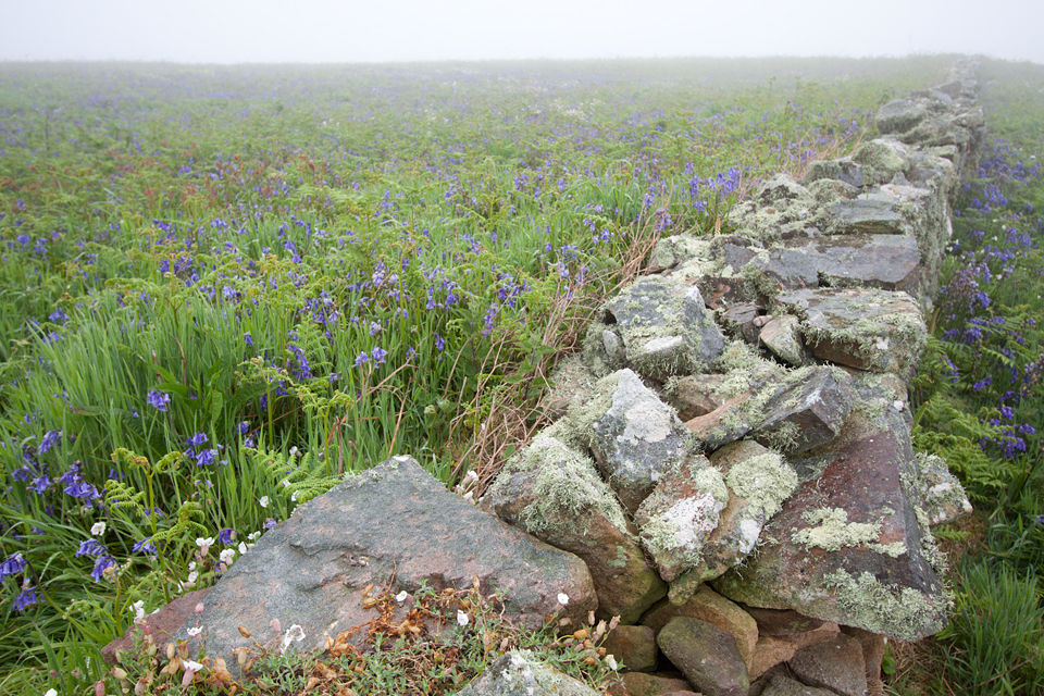 A crumbling stone wall, hyacinthus in the fog. Canon 50D, Canon EF-S 10-22mm f/3.5-4.5 USM, 1/50, f/5, iso 200, handheld.