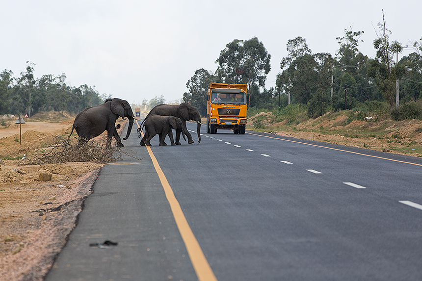 This new Chinese build highway - though drastically shortening travel times - comes with its own set of challenges, including preventing wildlife-vehicle collisions.