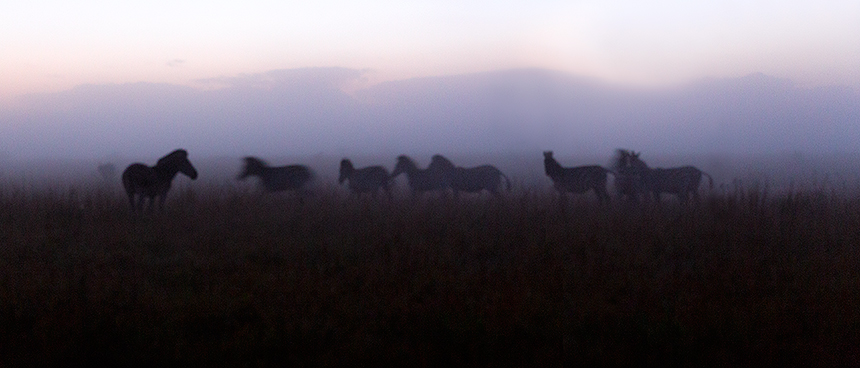 Zebra's, mist, high iso and a long exposure helped create this abstract pre-sunrise panorama.