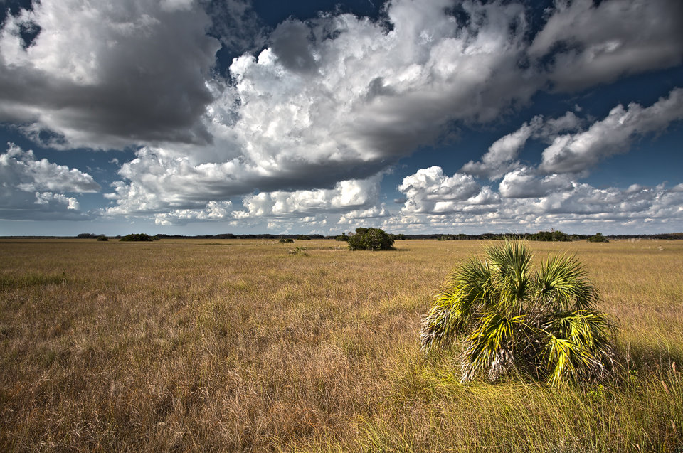 The essence of the Everglades from on top of of a pickup truck: endless 'grass' and skies. Canon 5D Mark III, Canon EF 17-40mm f/4.0 L USM, HDR, iso 100, handheld + Cokin grad ND filter.