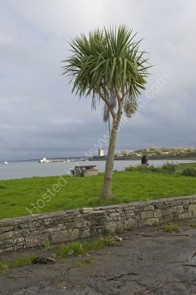 Carrigaholt County Clare Ireland