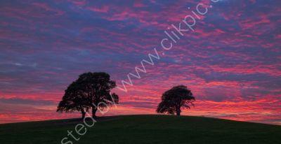 Alvecote trees at sunset