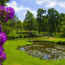 The Savill Garden,Windsor Great Park England.