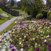 Guildford Castle Grounds ,Surrey England 2015