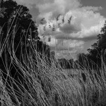 River Reeds and Clouds