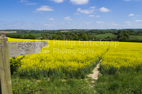 Footpath Sign to pathway through rapefield