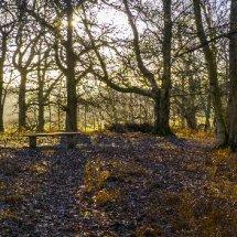 Abinger Roughs near Dorking Surrey