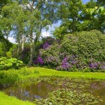 The Savill Garden,Windsor Great Park England.