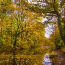 """ NEW "" November 2020. Basingstoke Canal Autumn"
