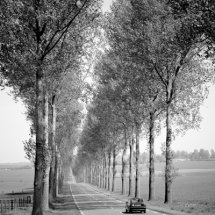 Tree lined road ,Picardy ,France .