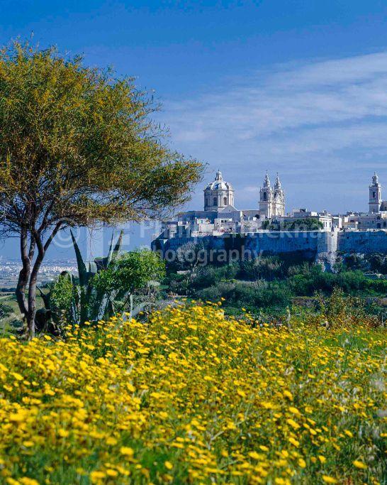 View to Mdina, Malta