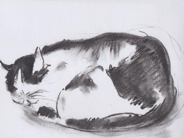 Catnap Charcoal