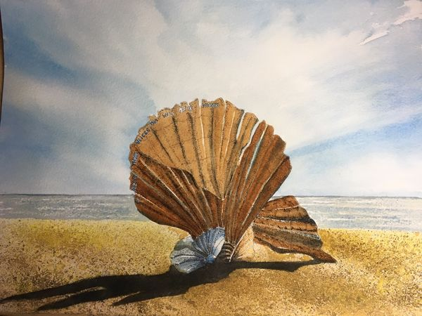 Scallop At Aldeburgh