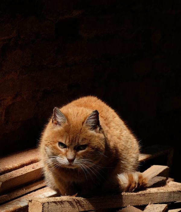 Gaillac Cat