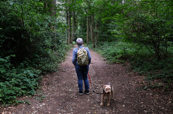 Selsdon Woods