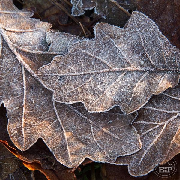 Decembers Wintry Breath