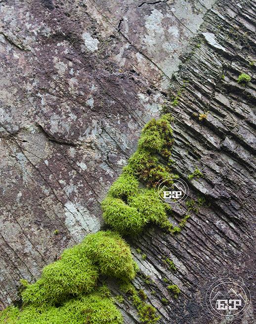 Slate Moss